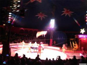 Tropics Global College Circus B
